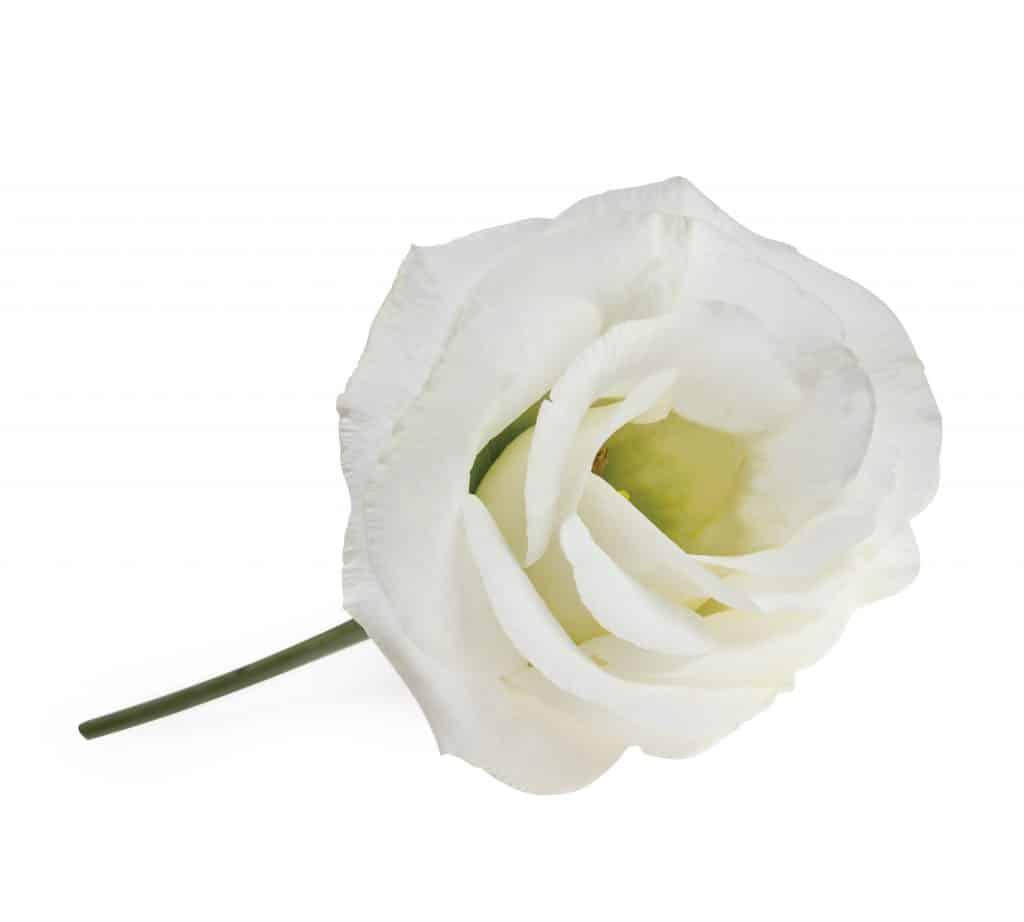 Lisianthus-Eustoma-Flower-White-Arrangement-Bouquet-Decoration-Pink-White-Blue-Green-Red-Lavender-Colour-Salmon-Orange-Yellow-Collection-Variety